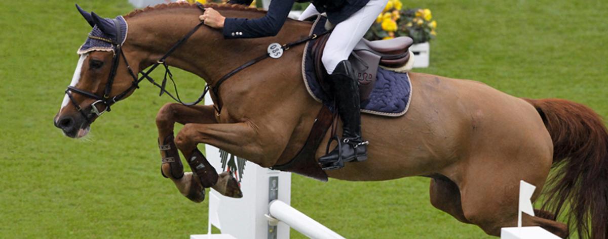 Pferde geben uns Flügel, die wir selber nicht haben.